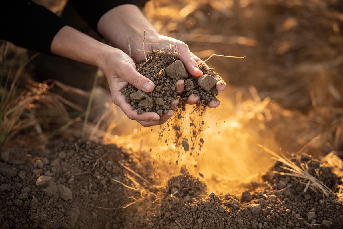 Our Soil