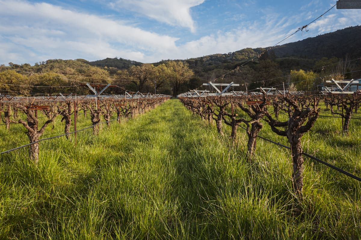 Spring time in the vineyards